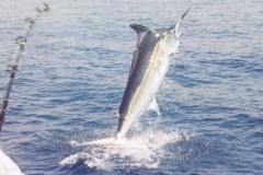 texas_offshore_fishing_guides