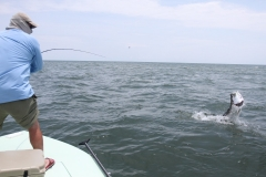 tarpon-on-fly